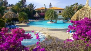 A piscina localizada em Dushi Violet Seru Coral Resort ou nos arredores