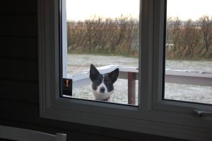 Pet or pets staying with guests at Móar Cottage