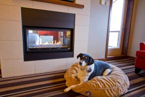 Pet or pets staying with guests at Evolution Whistler