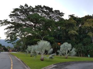 A garden outside Apartamento Angra dos Reis Bracuí