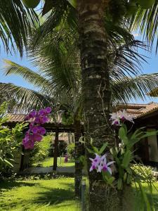 A garden outside Casa Pomar do Aconchego