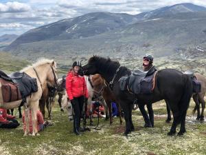 Hesteridning på hotellet eller i nærheten