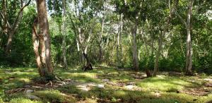 Jardín al aire libre en Belilula