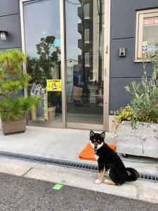 Pet or pets staying with guests at Guest House Matsu