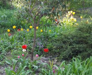 A garden outside Guest House U Ivanovicha