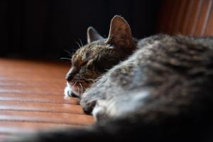 Animal ou animaux domestique(s) séjournant avec des clients dans l'établissement Hotel La Bohème