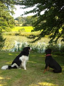 Pet or pets staying with guests at Abbey Farm Bed And Breakfast