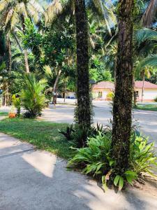 A garden outside Ao Thong Beach Bungalows