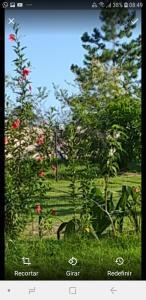 A garden outside Pousada Por do Sol