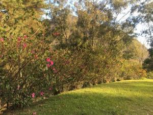 A garden outside Nosso Sítio - Rancho Santa Clara Itaipava