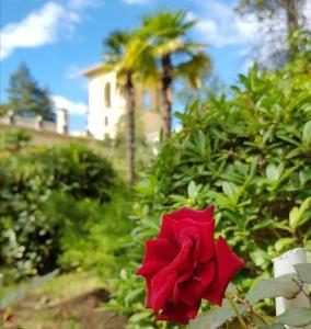 Сад в Amra Park-hotel & Spa