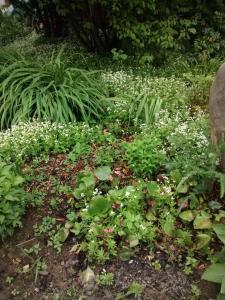 Ein Garten an der Unterkunft Landhaus Vieth