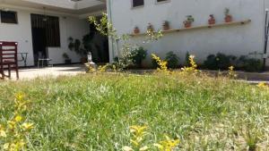 A garden outside Parrot Guest House