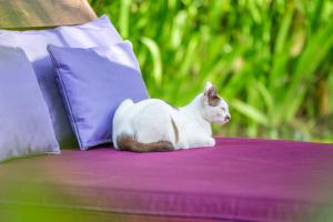 Pet or pets staying with guests at Swasti Eco Cottages