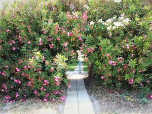 O grădină în afara Golden Beach Hotel