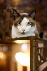 Pet or pets staying with guests at Hospedaria Tayrona