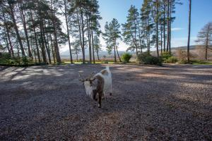 Pet or pets staying with guests at Old Pines Hotel And Restaurant
