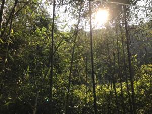 度假村附近的自然景觀