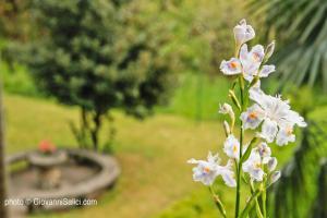 Giardino di Lake Como Peace Lodge - Casa della Pace