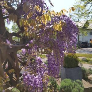 Ein Garten an der Unterkunft Alleehotel Europa
