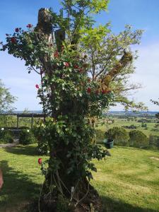 A garden outside La Pigario