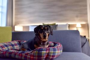 Pet or pets staying with guests at Staybridge Suites - Dundee