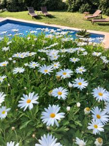 The swimming pool at or near Sa Plana Petit Hotel