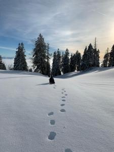 L'établissement Hotel du Cheval Blanc en hiver