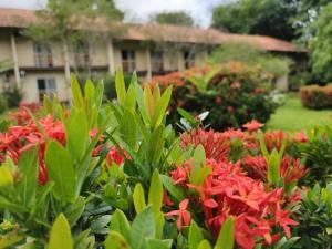 Um jardim em Beloalter Hotel