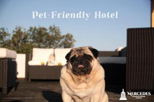 Pet or pets staying with guests at Mercedes Country House