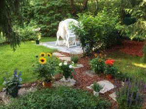 Zahrada ubytování Villa Boscoverde