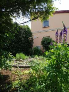 Ogród w obiekcie MV Apartamenty Komfort