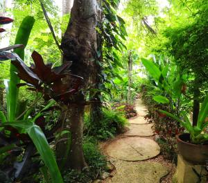 A garden outside Whitsundays BNB Retreat