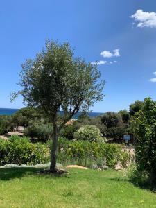 Ein Garten an der Unterkunft Porto Corallo / Costa Rei