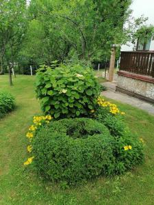 Zahrada ubytování House Jezerka