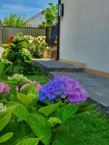 A garden outside Casa Antonia