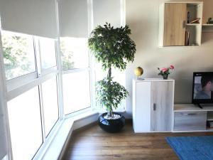 A kitchen or kitchenette at Sunshine Apartment