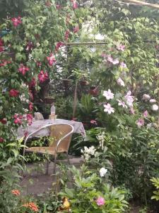 Сад в Комната у моря