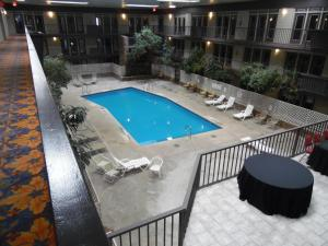 A view of the pool at 1Hotel or nearby