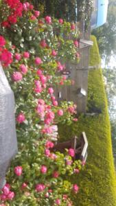 Een tuin van My Dream