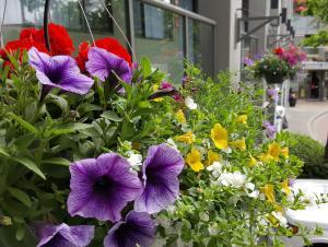 A garden outside Accent Inns Kamloops