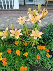 "A garden outside Гостевой дом ""Хуторок"""
