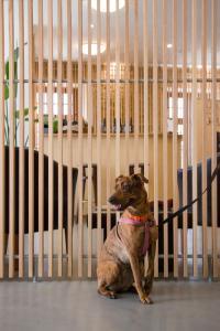 O animal ou animais de estimação com os hóspedes em Hotel Meira