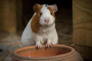 Pet or pets staying with guests at Aldeia da Mata Pequena