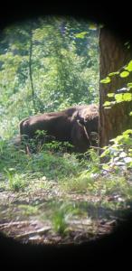 Zwierzęta w gospodarstwie agroturystycznym lub w pobliżu