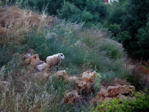 Άλλα ζώα σε αυτή η βίλα ή στη γύρω περιοχή