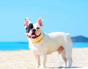Pet or pets staying with guests at Rabbit Resort Pattaya