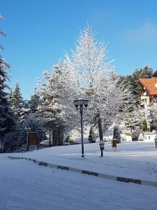 studio 38 borovets hills during the winter