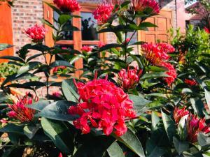 A garden outside Tam Coc Friendly Homestay