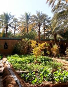 Jardin de l'établissement Riad Dar Sofian